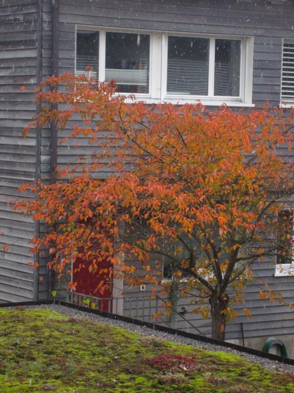 autumn amber (mrscarmichael)