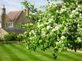 in a Cotswold country garden (mrscarmichael)