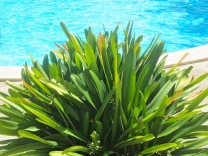pollenca pot plant (mrscarmichael)