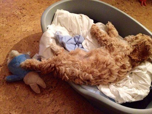 dis bed ain't big enough for da both of us (mrscarmichael)