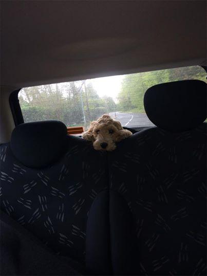 backseat driver (mrscarmichael's daughter)