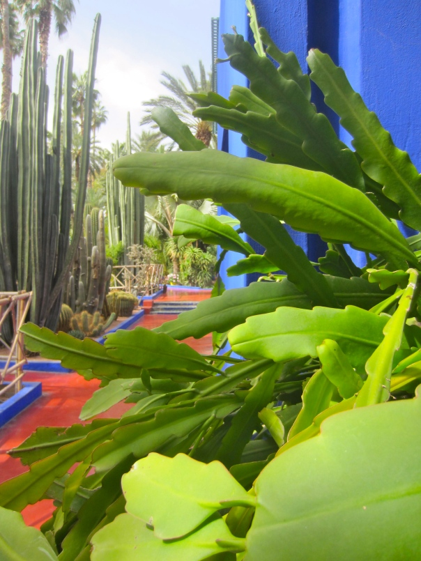 i do love a cactus highlighted by cobalt blue (mrscarmichael)