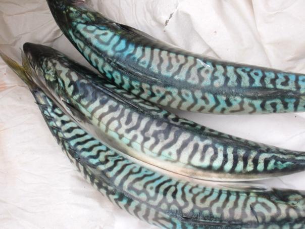 fish bliss (mrscarmichael)