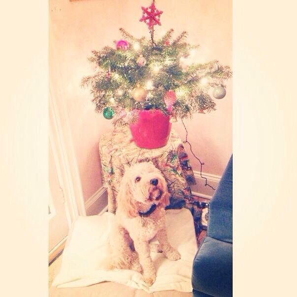the boy's first christmas (mrscarmichael)