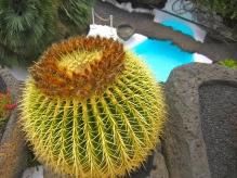 cactus cavern (mrscarmichael)