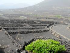 hola volcanic vinyards (mrscarmichael)